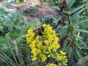 bee, leadership, confidence, bumblebee